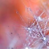 Isceliteljska moć kristala