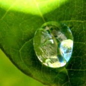 Dijamant – simbol života ili otrov